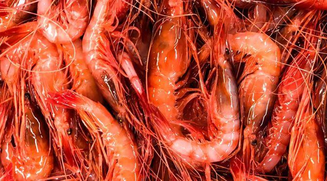 Gambas-de-palamos-prawns-from-palamos-1-672x372